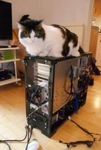 Daphne PC rebuild